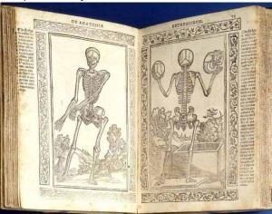 primo libro anatomia