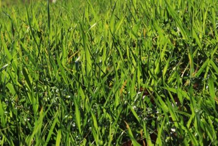 erba di sfondo