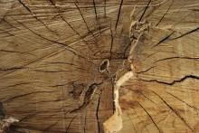 legno vissuto